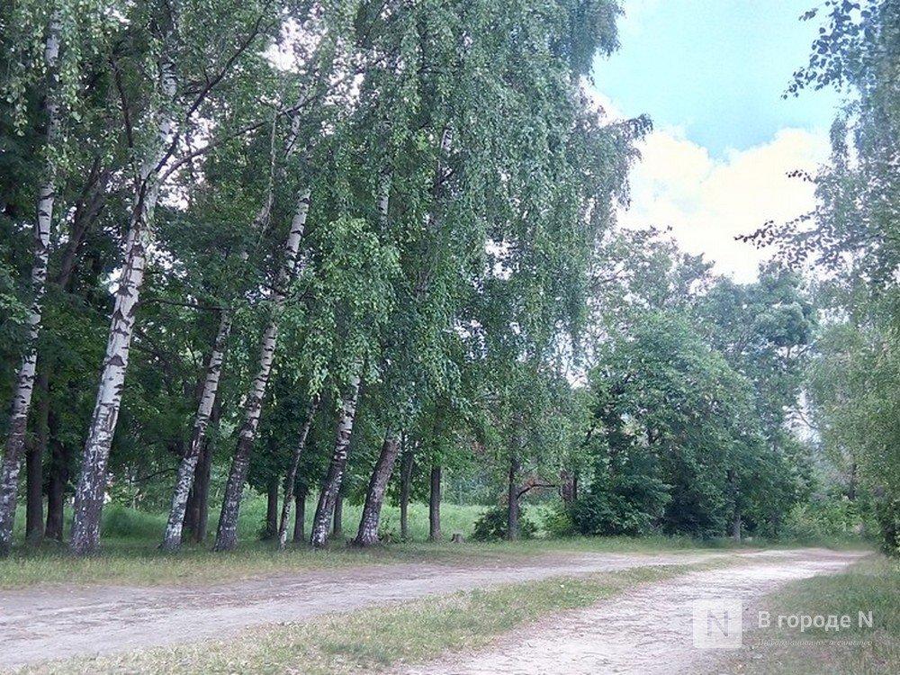 Прогуляться по лесным массивам Автозаводского района приглашают нижегородцев - фото 1