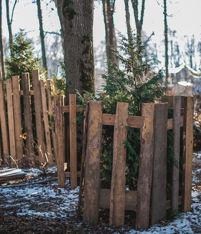 Семь деревьев спилили в парке «Швейцария» - фото 1