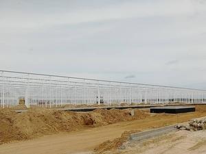 Крупнейший в регионе тепличный комплекс инвестор введет в эксплуатацию на Бору до конца года