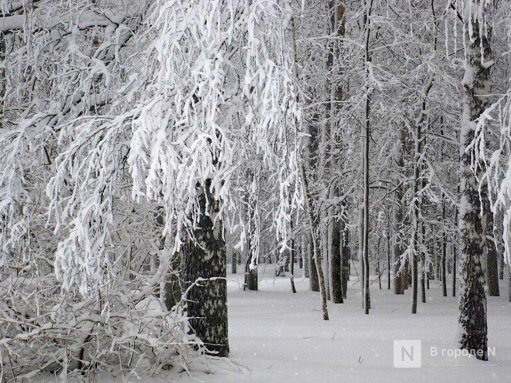 Метель и сильные снегопады надвигаются на Нижегородскую область - фото 1