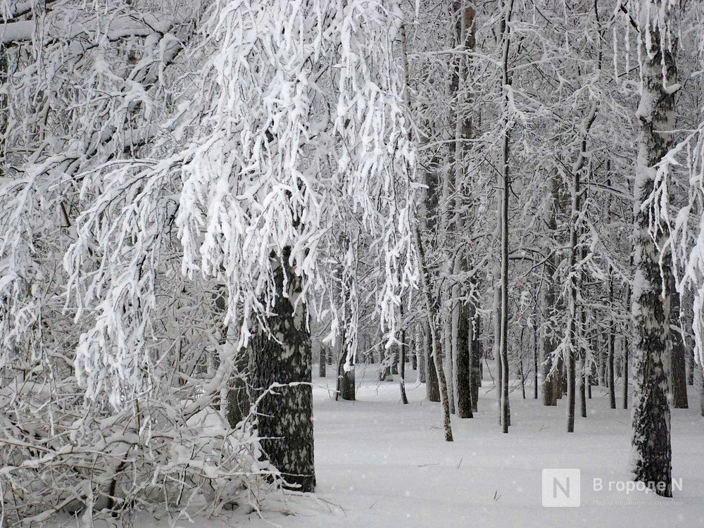 Морозы до -8°С и снегопады ждут нижегородцев в выходные - фото 1
