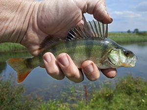 Нижегородскому рыбаку грозит штраф до 500 тысяч рублей