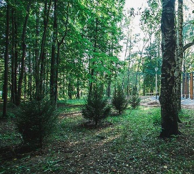 Более тысячи деревьев посадили в нижегородском парке «Швейцария» - фото 1