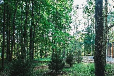 Часть деревьев высадят в нижегородском парке «Швейцария» осенью