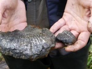 Исследовательская группа Межрегиональной экспедиции «Подъемная сила» обнаружила аммониты в водоеме Присурского заповедника