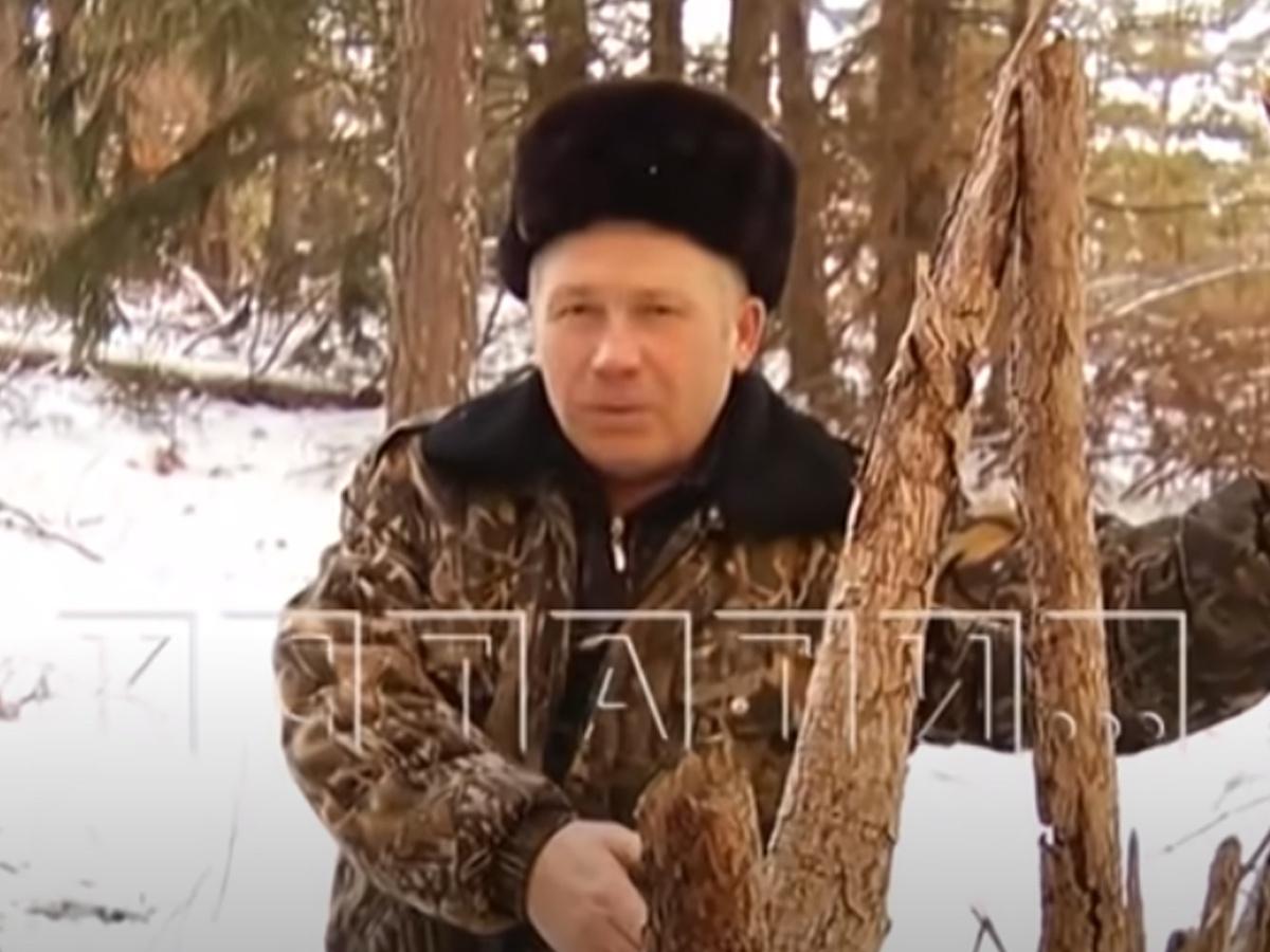 Жителя Гагинского района судят по обвинению в краже валежника - фото 1