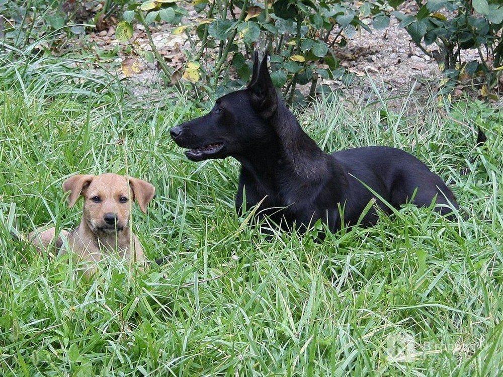 Площадку для выгула собак оборудуют в парке «Швейцария» - фото 1