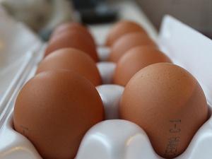 В Нижегородской области подешевели куриные яйца