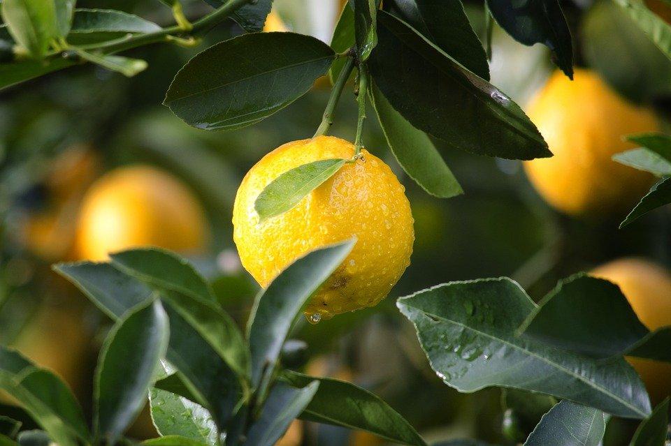 5 самых полезных продуктов на Земле, которые обязательно должен есть каждый - фото 1