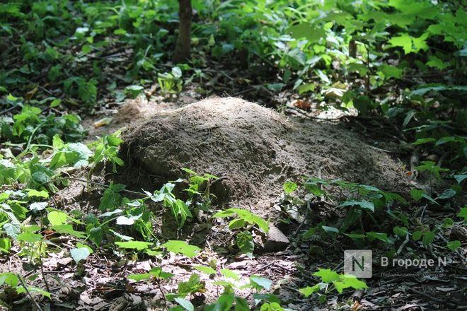 Конфликт на костях: за и против строительства храма на улице Родионова - фото 46