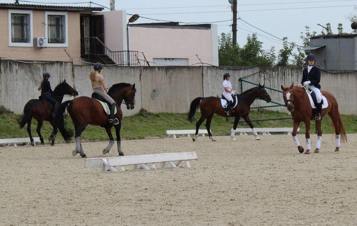 Взаимопонимание и грация: всероссийские соревнования по выездке стартовали в Нижнем Новгороде - фото 24