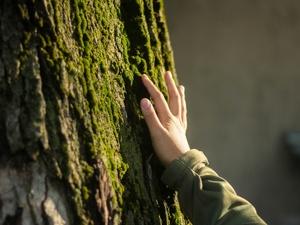 Порисовать на деревьях смогут нижегородцы в парке «Дубки»